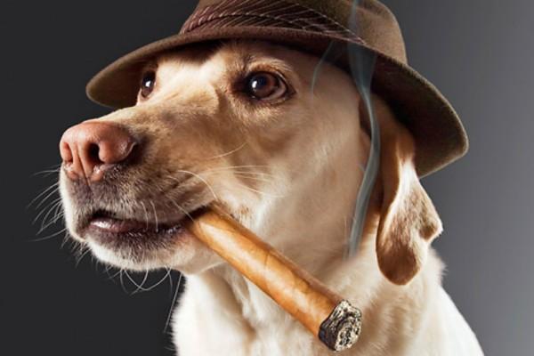 Το κάπνισμα βλάπτει σοβαρά... και το σκύλο σας!