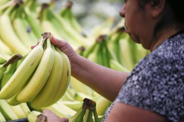 Ιάπωνες έφτιαξαν είδος μπανάνας που τρώγεται χωρίς καθάρισμα, με τη φλούδα!