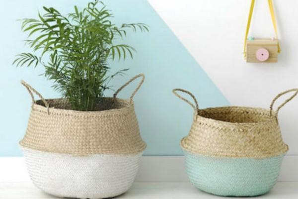 Δες ποιο φυτό εσωτερικού χώρου είναι κατάλληλο για κάθε σημείο του σπιτιού!
