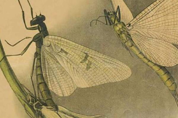 Στο Γενί Τζαμί οι πίνακες που μάθαιναν ζωολογία οι μαθητές τον 19ο αιώνα!