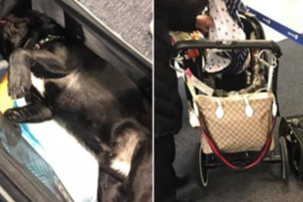 Φρίκη σε πτήση της United Airlines: Σκύλος πέθανε σε πτήση γιατί τον έβαλαν σε ντουλαπάκι αποσκευών!