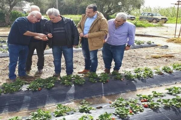 Η κακοκαιρία έφερε σοβαρές ζημιές στις καλλιέργειες σε Αχαΐα και Ηλεία! (Photo)