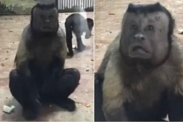 Ένας πίθηκος με ανθρώπινο πρόσωπο αναστατώνει το διαδίκτυο