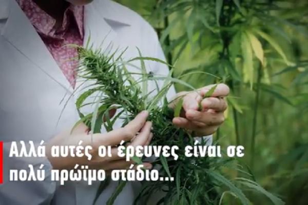 Φάρμακο ή μόδα: Όλες οι αλήθειες και τα ψέματα για την φαρμακευτική κάνναβη! (Video)