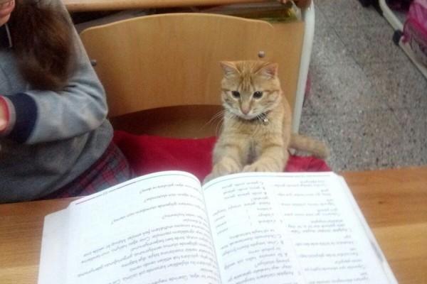 Μια τάξη δημοτικού υιοθέτησε ένα... γάτο και πλέον κάνει μάθημα μαζί τους! (photos+video)