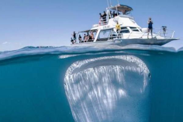 Συγκλονιστική φωτογραφία: Το μεγαλύτερο ψάρι στο κόσμο, με το αβυσσώδες στόμα (Photos+video)