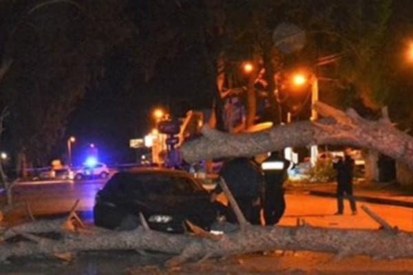 Χαμός στο Ναύπλιο από τους θυελλώδεις ανέμους: Ξεριζώθηκαν δεκάδες δέντρα! (Photos)