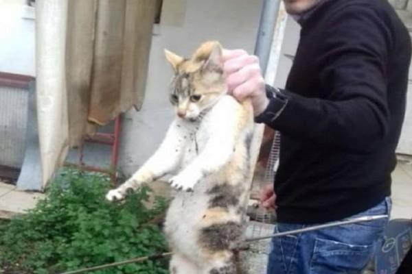 Καρδίτσα: Άλλο ένα τέρας! Παγίδευσε γάτα σε κλουβί και την χτύπησε με ψαροντούφεκο!