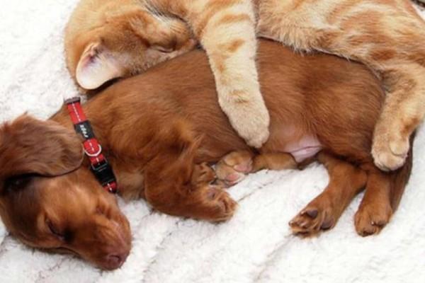 Τι προβλέπει το νομοσχέδιο για δεσποζόμενα και αδέσποτα ζώα