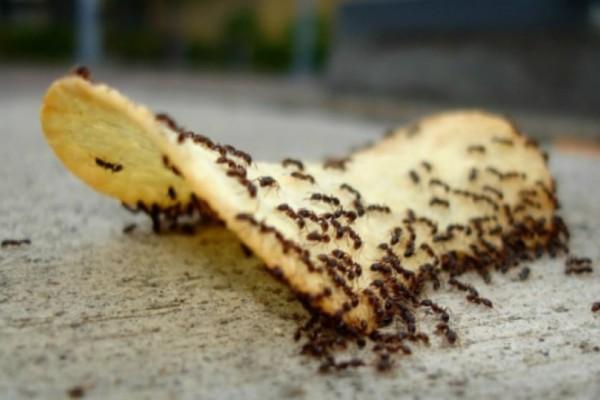 Το κόλπο για να εξαφανίσετε τα μυρμήγκια από το σπίτι!