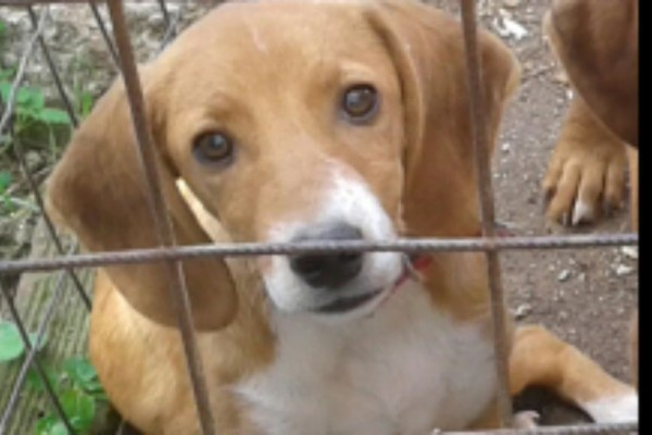 Εντοπίστηκε ο σκύλος που κακοποίησαν οι στρατιώτες - Τον είχε χάσει ο ιδιοκτήτης του