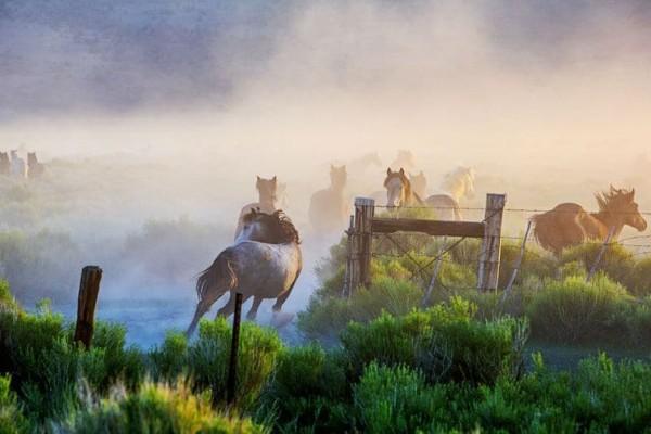 Η φωτογραφία της ημέρας: Άγρια άλογα στη φύση!
