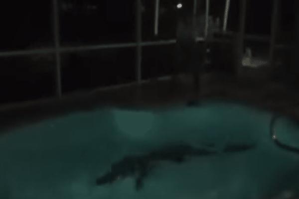 Πανικός στη Φλόριντα: Βρήκαν αλιγάτορα σε πισίνα σπιτιού! (Video)