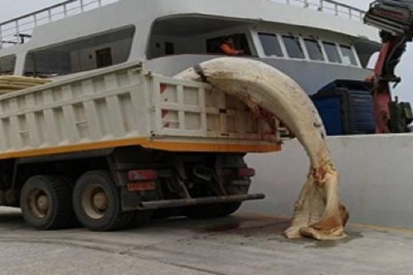 Σοκαριστικές εικόνες από την νεκρή φάλαινα στη Σαντορίνη! (Photo)