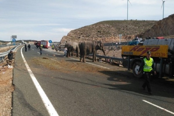 Επικό βίντεο: Ελέφαντες σταμάτησαν την κυκλοφορία σε κεντρικό αυτοκινητόδρομο! (Video)