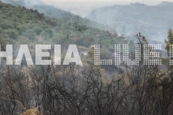 Σε ύφεση οι πυρκαγιές στην Ηλεία -  Μάχη με τις αναζωπυρώσεις δίνουν οι πυροσβέστες (video)