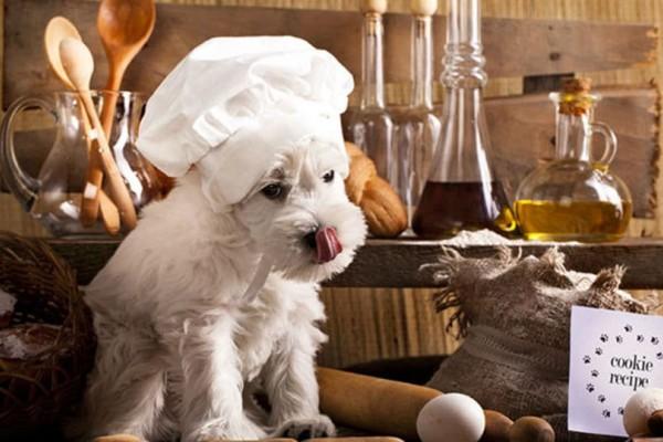 Fly Dog στην Νέα Ιωνία: Γκουρμέ εστιατόριο για... σκύλους!