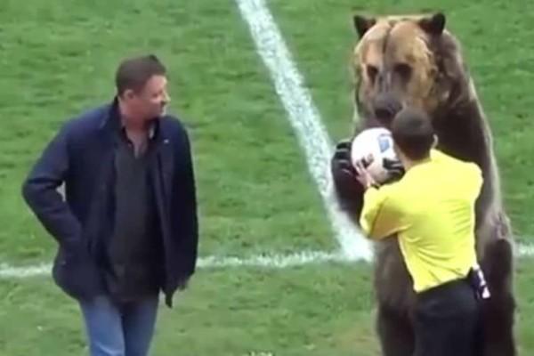 Αδιανόητο! Εβαλαν αρκούδα να κάνει κόλπα πριν από ποδοσφαιρικό ματς -Ξεσηκώθηκαν οι φιλοζωικές (video)