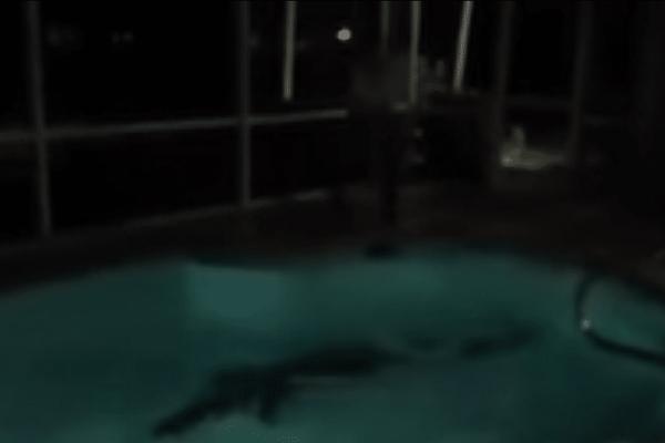 Δυσάρεστη έκπληξη: Ζευγάρι ανακαλύπτει... αλιγάτορα μέσα στην πισίνα του! (Video)