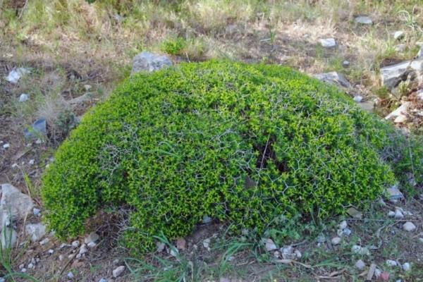 Άρτα: Βρέθηκαν σε θάμνους δύο σάκοι γεμάτοι...