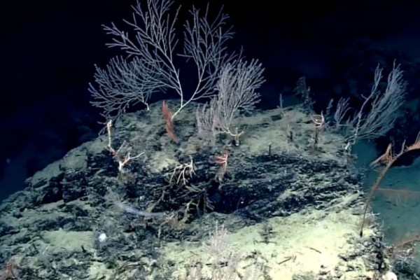 Συγκλονιστικό βίντεο: Κήπος από κοράλλια ηλικίας 1.000 ετών που κόβουν την ανάσα!
