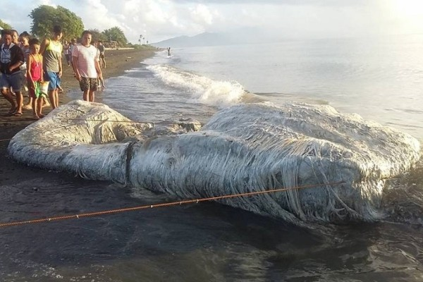 Τρόμος στις Φιλιππίνες: Ξεβράστηκε μαλλιαρό πλάσμα σε ακτή!