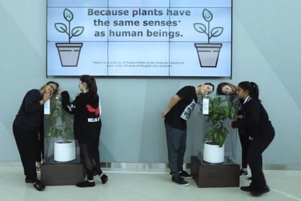 Πείραμα στα ΙΚΕΑ: Βρίζουν ένα φυτό και... αποθεώνουν ένα άλλο! (video)