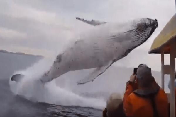 Απίστευτο βίντεο: Φάλαινα κάνει... πιρουέτα!