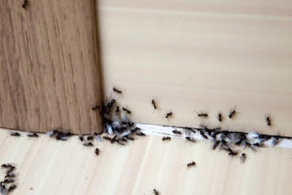 Πώς να κρατήσετε τα μυρμήγκια έξω από το σπίτι