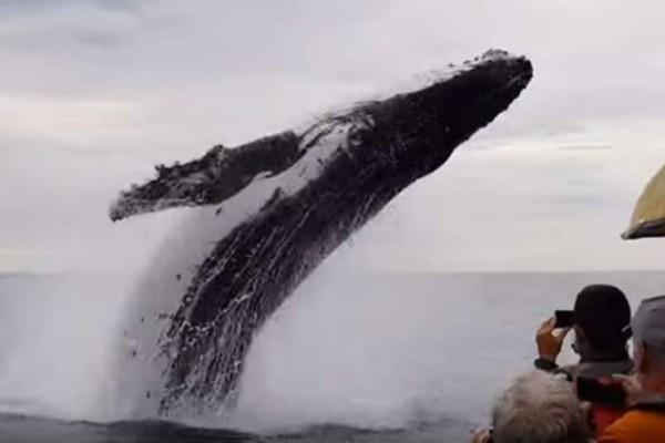 Εντυπωσιακό βίντεο: Φάλαινα κάνει πιρουέτα μπροστά σε τουρίστες!