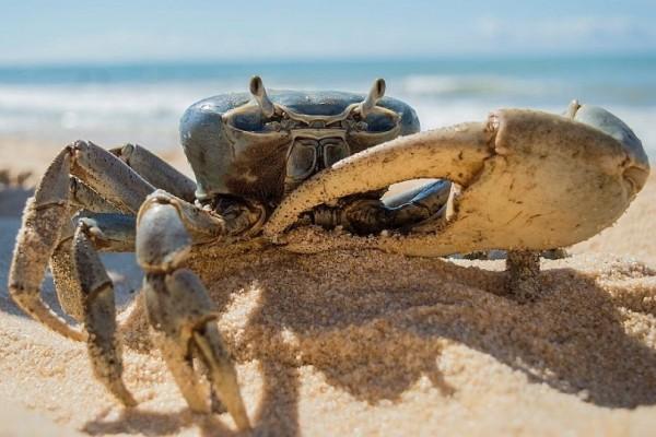 Τρομακτικό βίντεο: Καβούρι απειλεί τουρίστρια σε ελληνική παραλία!