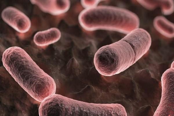 Επιστήμονες «διάβασαν» το DNA του αρχαιότερου βακτηρίου της πανούκλας!