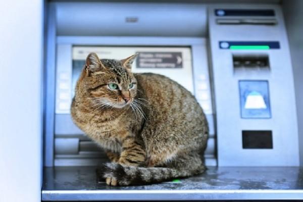 Λάρισα: Συνέβη κι αυτό... Εγκλωβίστηκε γάτα σε... ΑΤΜ!
