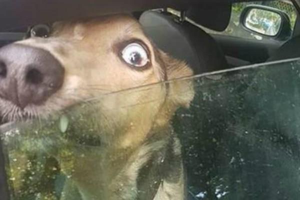 Τραγικό: Σκύλος κλαίει και ουρλιάζει επειδή ο ιδιοκτήτης του τον κλείδωσε στο ΙΧ μέσα στον καύσωνα !
