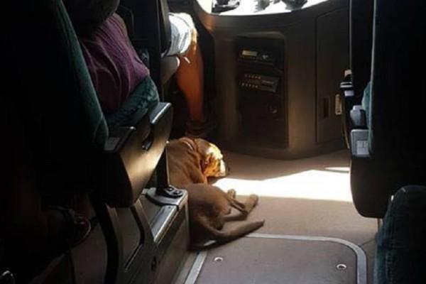 Ο οδηγός ΚΤΕΛ που είναι ο ήρωας του καλοκαιριού: Παίρνει μαζί του αδέσποτο σκύλο για να τον σώσει από τη ζέστη (video)