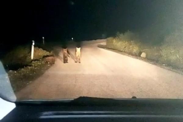 Μία απίστευτη συνάντηση στο Μέτσοβο – Βρήκε στον δρόμο του τρεις αρκούδες (video)