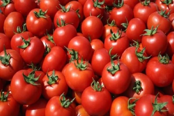 Πειραιάς: Κατασχέθηκαν πάνω από 2 τόνοι ντομάτας σε επιχείρηση!