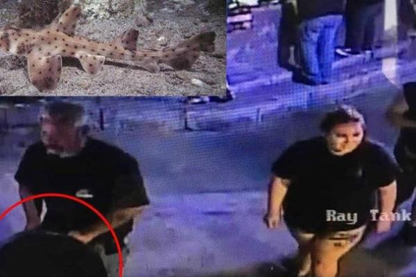 Αδιανόητο περιστατικό! Έκλεψαν καρχαρία από το ενυδρείο βάζοντάς το σε καροτσάκι μωρού! (video)