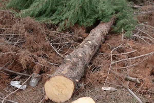 Τραγωδία στην Πρέβεζα: Τον καταπλάκωσε δένδρο που πήγε να κόψει!