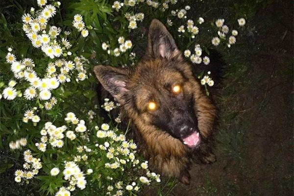 Απίστευτο περιστατικό! Το όνομα του σκύλου τον ανάγκασε να τραβήξει όπλο...