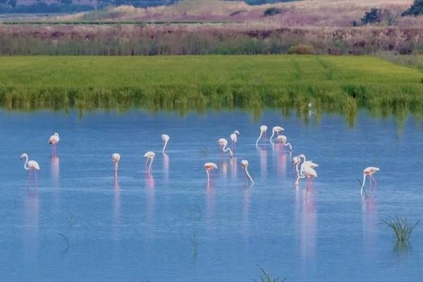 Η φωτογραφία της ημέρας: Ένα σμήνος από φλαμίνγκο στη λίμνη La Janda!