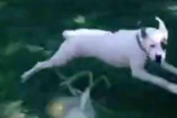 Στιγμές γέλιου! Το σκυλί που τρέμει στη θέα ενός... καλαμποκιού! (video)