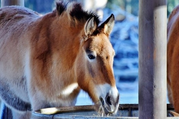 Σας αφορά: Τι προβλέπει ο νόμος για τα άλογα και τα γαϊδούρια εργασίας!