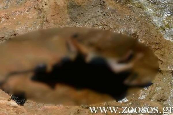 Κτηνωδία στην Πάρο - Πέταξαν σκύλο στη θάλασσα με πέτρα στο λαιμό