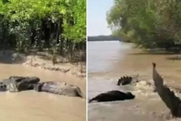 Απίστευτο! Η μάχη τεράστιου κροκόδειλου με ένα αγριογούρουνο! (video+photo)
