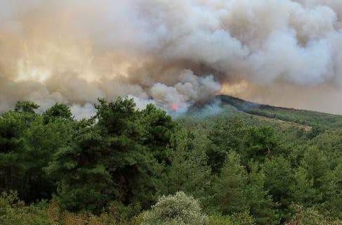 Υπό μερικό έλεγχο η φωτιά στον Τύρναβο!