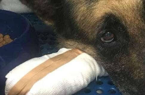 Μα είναι δυνατόν; Δεν θέλει πίσω το σκυλί του, γιατί κάηκαν οι πατούσες του στο Μάτι (photos)