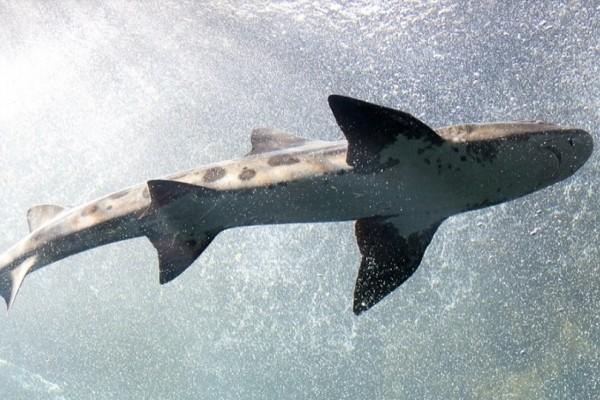 Γαύδος: Πήγε για ψάρεμα και έβγαλε... καρχαρία! (photos)