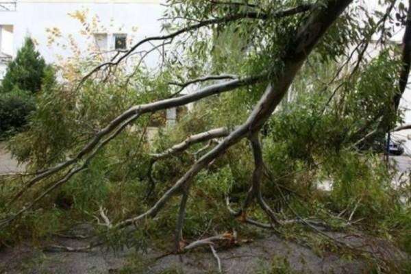 Ο «Ξενοφών» έφερε πολλά προβλήματα στο Μαρούσι! - Ο θυελλώδης άνεμος έριξε δέντρα και κολόνα της ΔΕΗ!