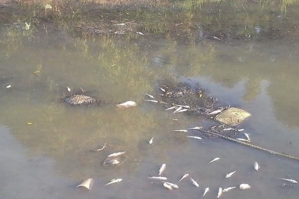 Κέρκυρα: «Νέκρωσε» το ποτάμι της Λοξίδας λόγω λυμμάτων! (Photo)